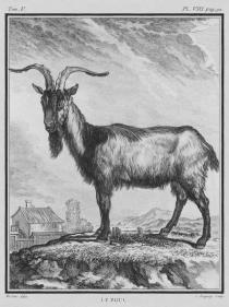 Le_Bouc_-_Billy_Goat_-_Gallica_-_ark_12148-btv1b23002520-f10