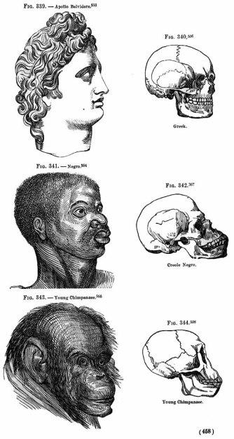 Ο νέγρος, ένα στάδιο μετά τον χιμπατζή. Στην κορυφή της «πυραμίδας», ο αρχαίος Έλλην. Από το «Indigenous Races of the Earth» του Josiah Clark Nott και του George Robins Gliddon (1857).